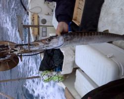 fishing tour cinque terre